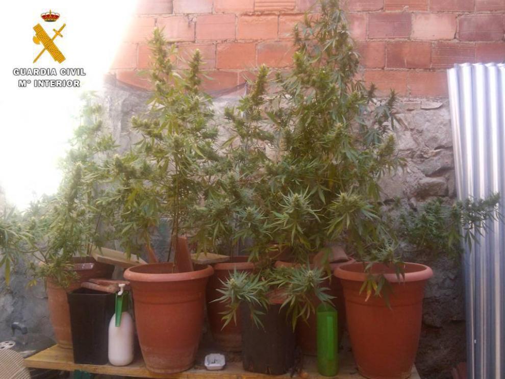 Una de las habitaciones se usaba como invernadero donde había seis plantas de cannabis en estado de crecimiento. En la zona destinada a galería se hallaron otras 9 plantas en avanzado estado de crecimiento.
