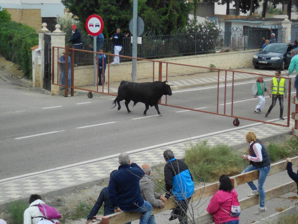 Uno de los toros que se ha escapado del encierro andando de Novallas