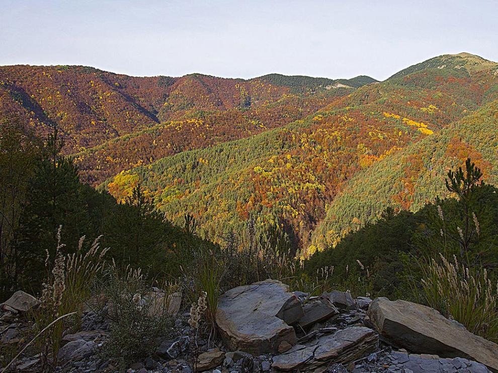 Paleta de colores en el bosque de la Pardina del Señor (Fanlo).