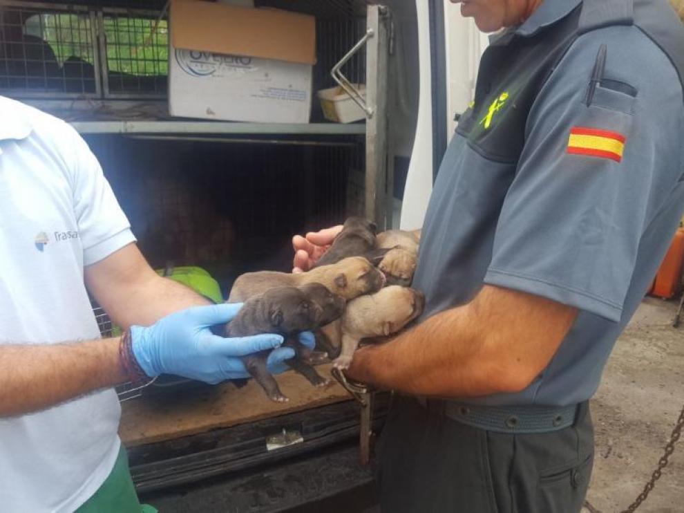 Un agente de la Guardia Civil durante un operativo llevado a cabo en Galicia y que consiguió salvar a varios cachorros que vivían en condiciones deplorables.