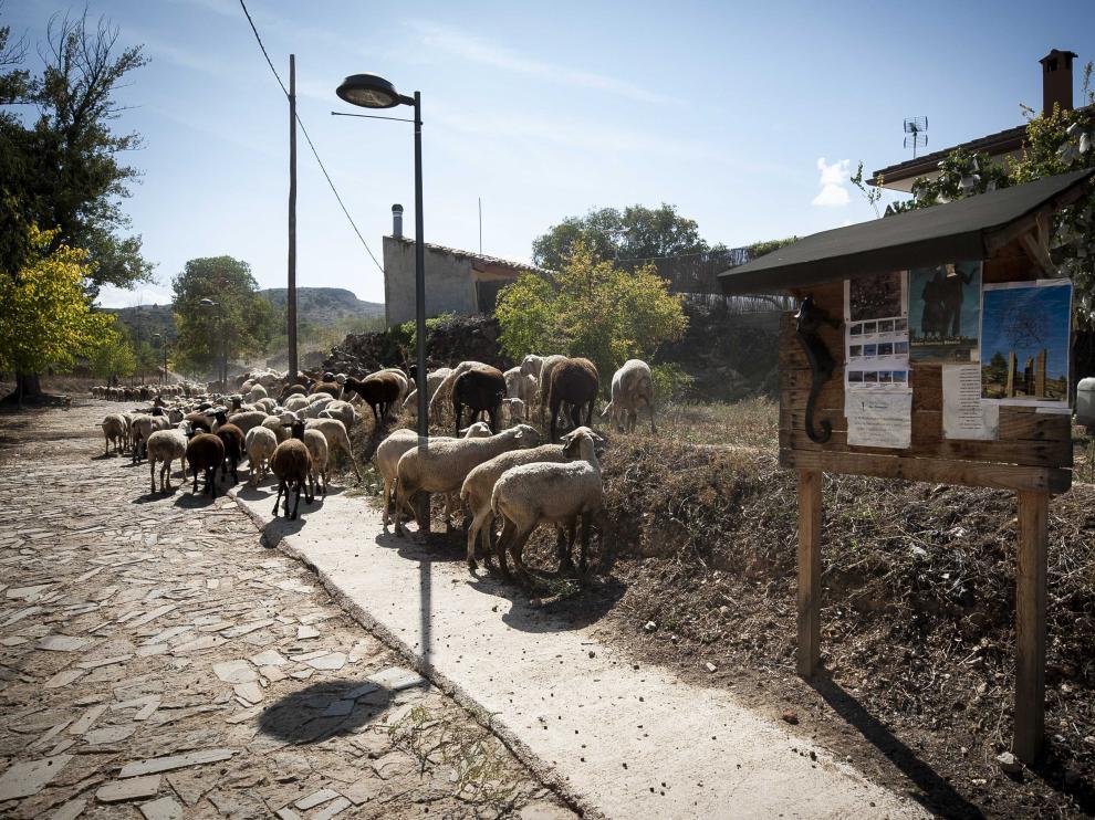 Calle del municipio de Alloza.