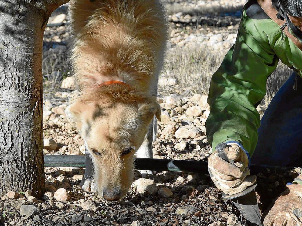 Mario Cequier y su perro Teo buscan trufas en su finca.
