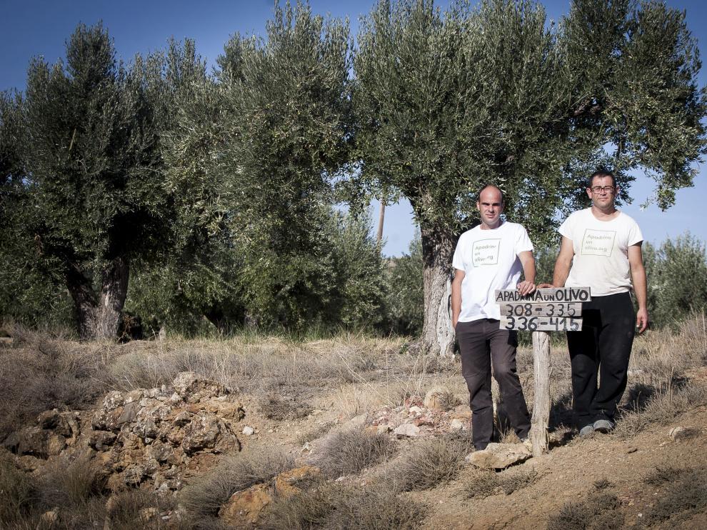 David Pradas y José Manuel Candial, en una de las parcelas rescatadas por Apadrina Un Olivo. laura uranga Vista de Oliete.