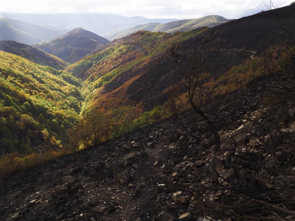 Zona afectada por el fuego en Galicia.