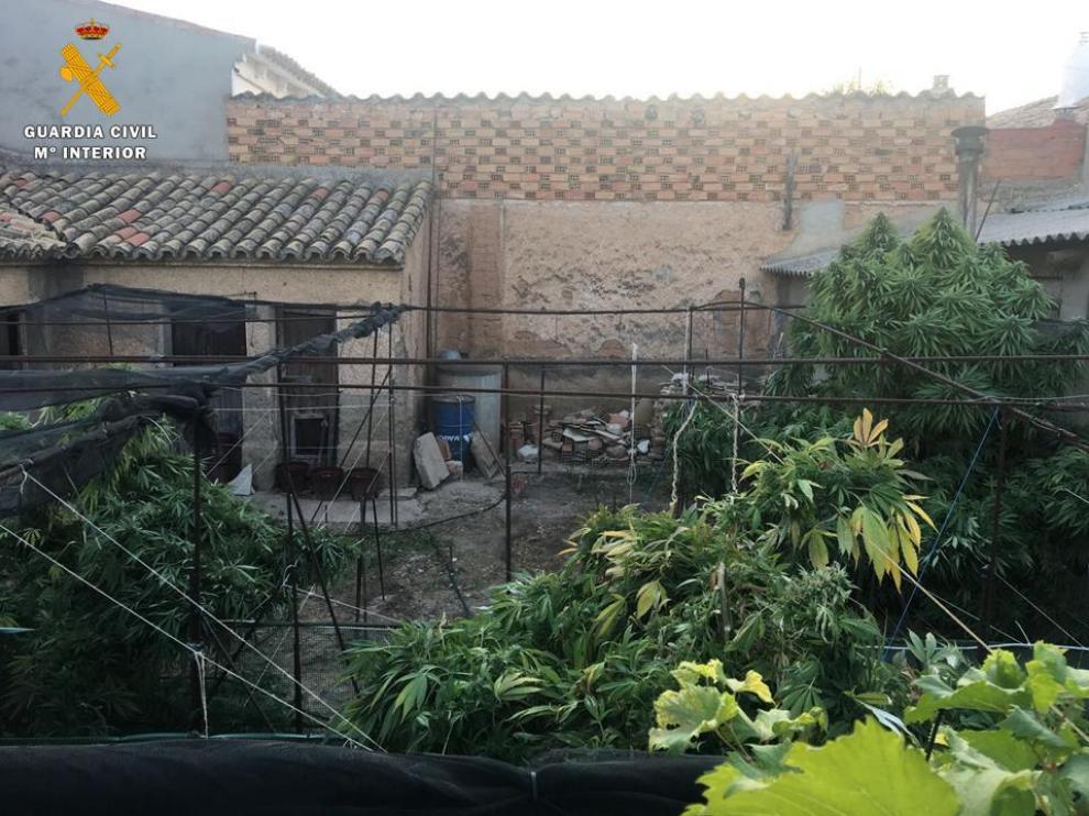 Los moradores de este domicilio, un hombre y una mujer, de 47 y 37 años y nacionalidad rumana, fueron detenidos por un presunto delito contra la salud pública por cultivo o elaboración de droga y otro de tráfico de estupefacientes.