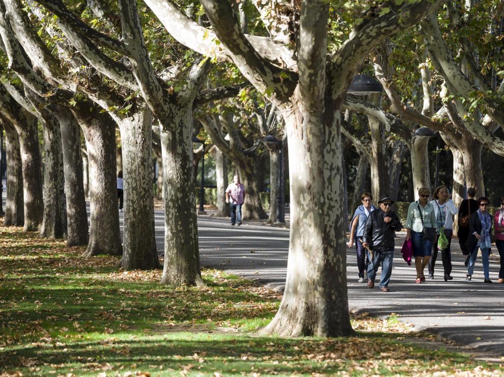 Algunos visitantes en el paseo de los plátanos del parque Grande José Antonio Labordeta.