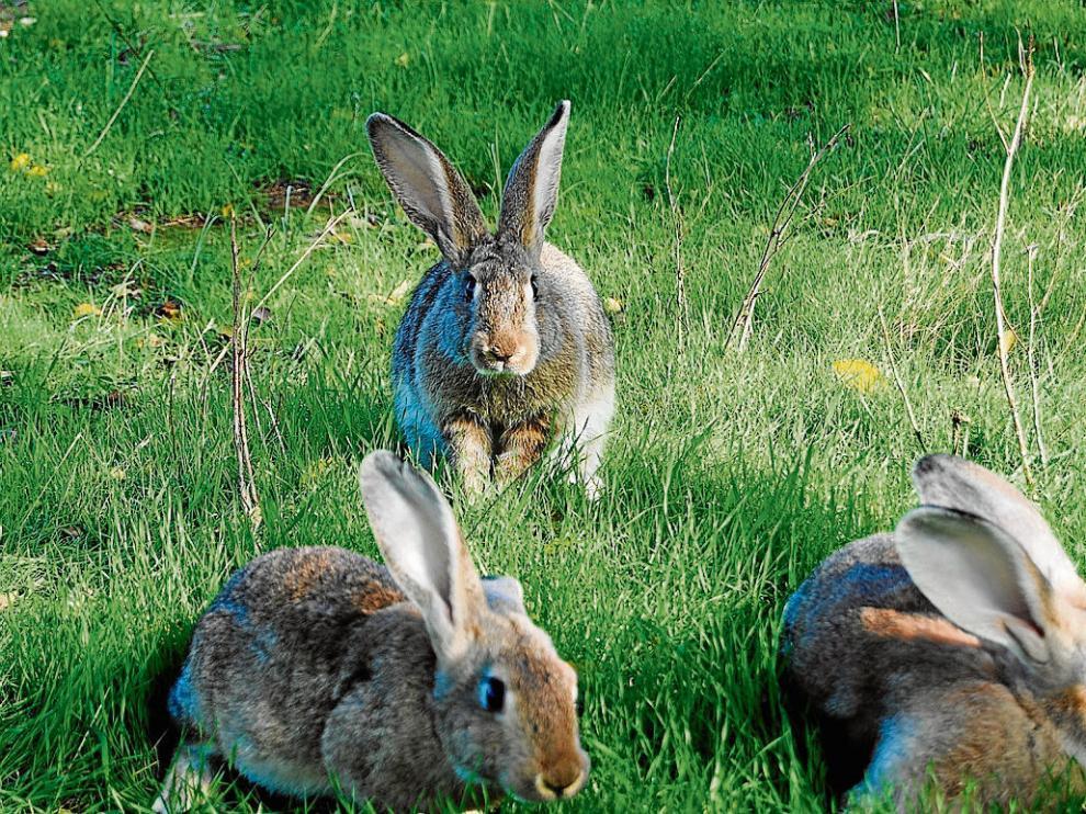 Animales de Agromatarrañaa que se alimentan con plantas aromáticas y medicinales.