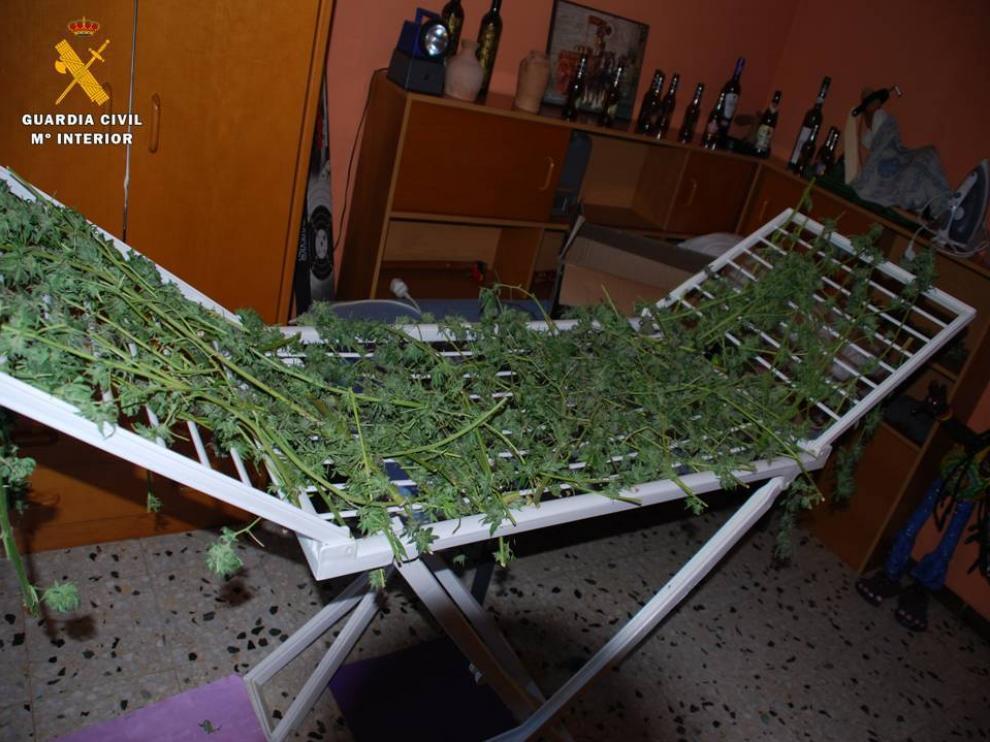 Se encontraron numerosas ramas de marihuana colgadas por la pared en proceso de secado, e incluso sobre un tendedor extensible.