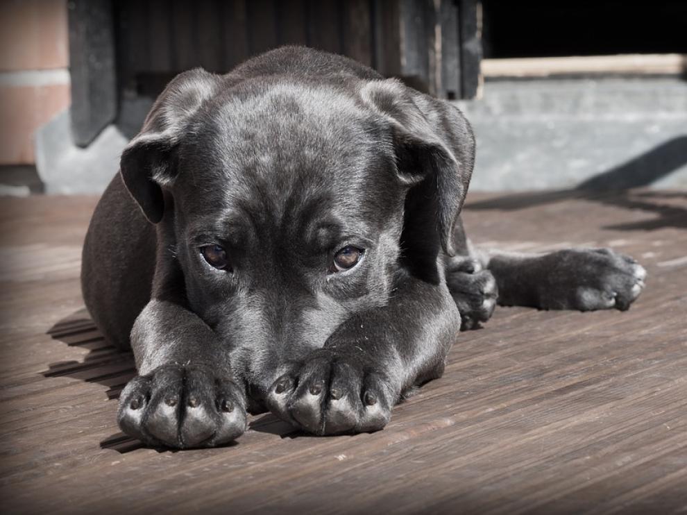Un equipo de científicos hadesarrollado un fármaco capaz de acabar con los efectos que provoca en las mascotas el ruido.