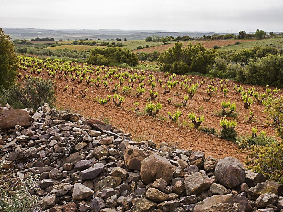 Esta empresa posee 3.800 hectáreas de viñedo.