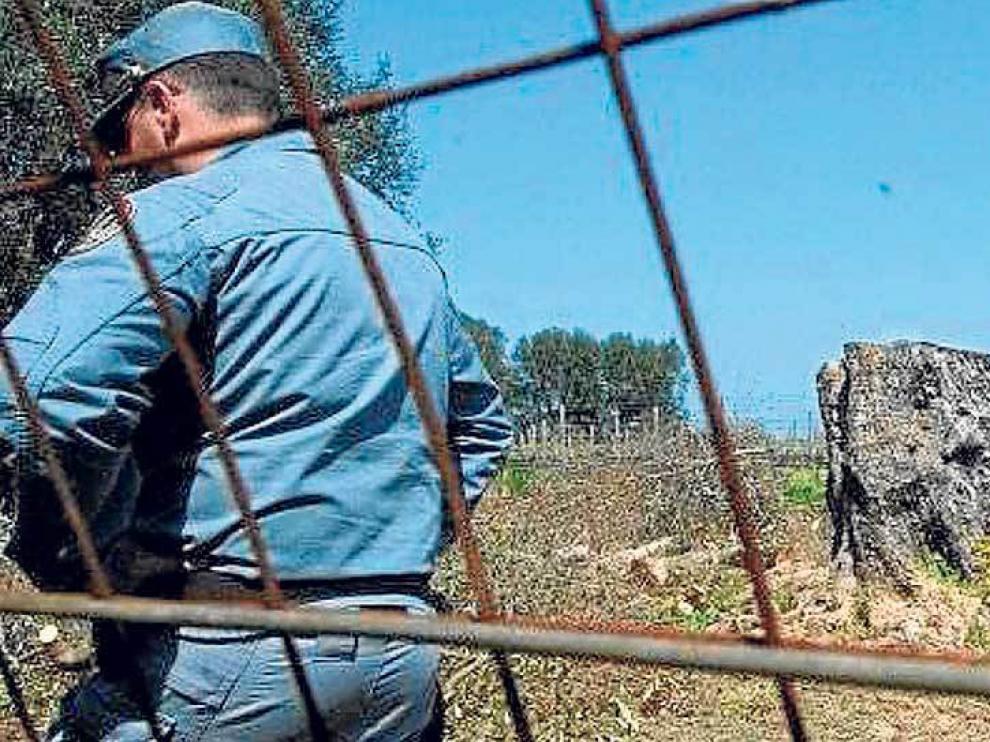 Talas de olivos afectados por la bacteria xylella fastidiosa en la región italiana de Puglia.