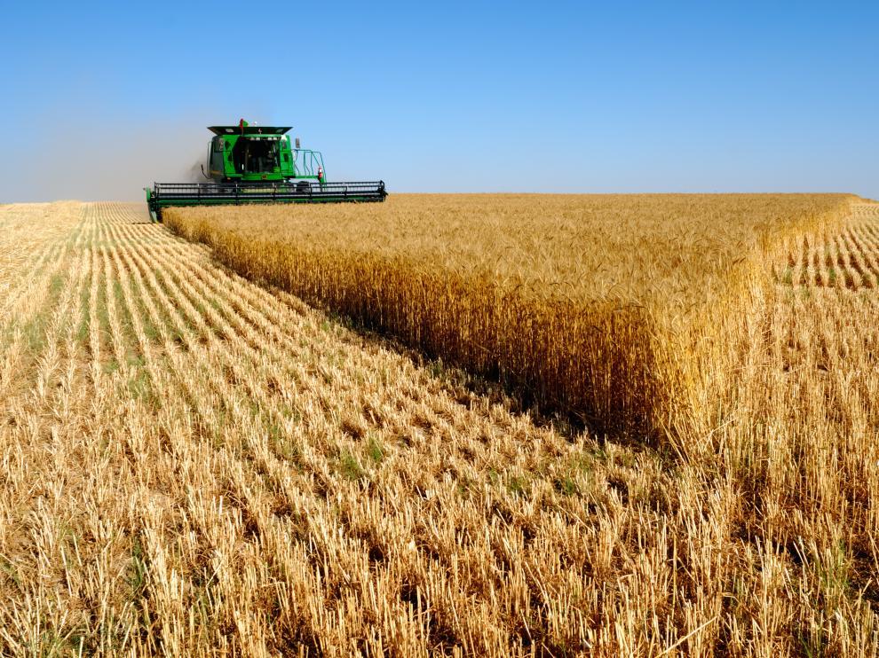 Labores de recolección en un campo de trigo