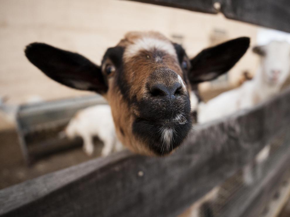 Animales en la granja escuela de Cerveruela.