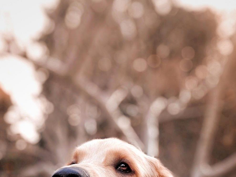Un perrito muy detallista... ¿con su dueño?