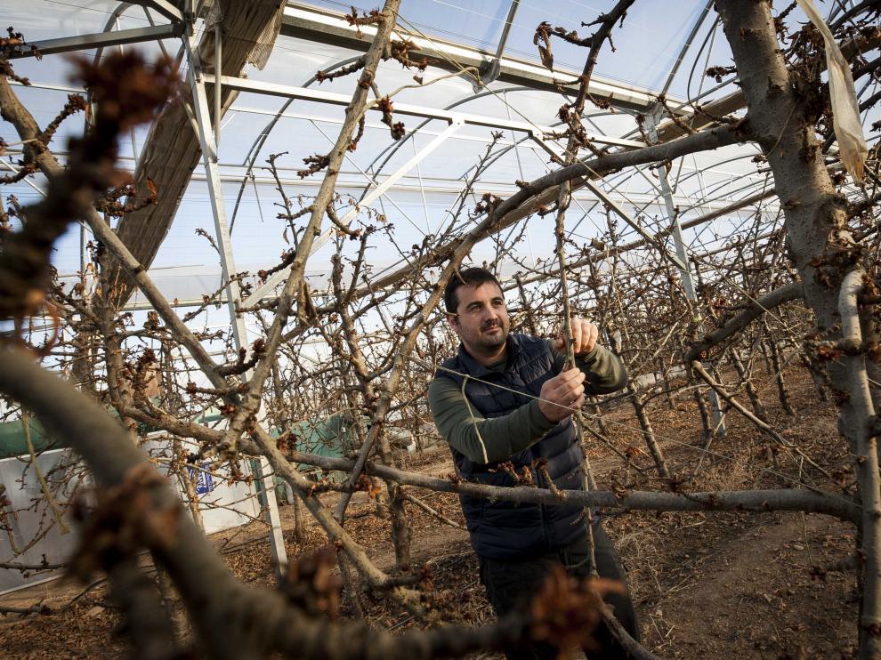 Javier de Pablo empieza estos días a preparar sus plantaciones de cerezas en la finca de Fruit Luxury.