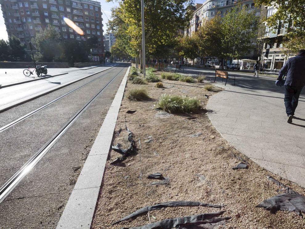 El mal estado de los parterres y jardineras de la traza del tranvía genera quejas entre los vecinos.