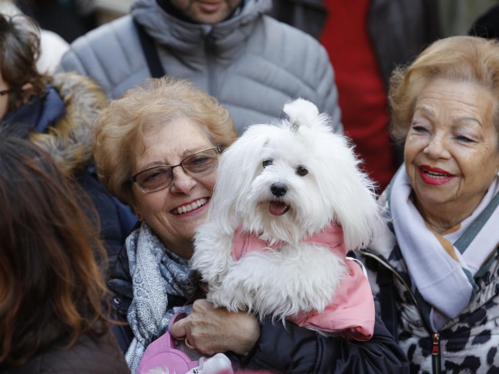 Los animales de Zaragoza reciben su bendición por San Antón