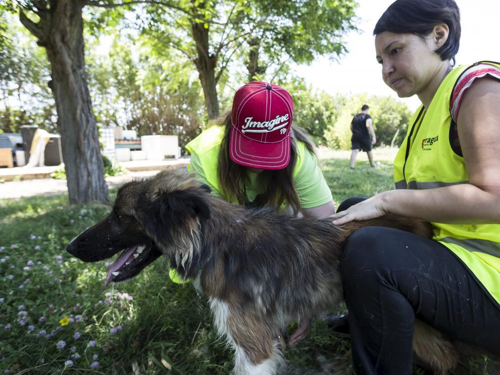 Trabajadores del Centro de Protección Animal, ubicado en Peñaflor, con uno de los perros que fueron rescatados este año.