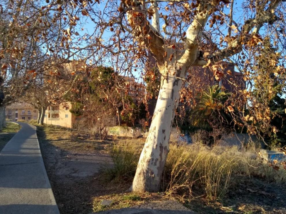 Estado actual de la zona del Canal por San José, los vecinos piden que se arregle