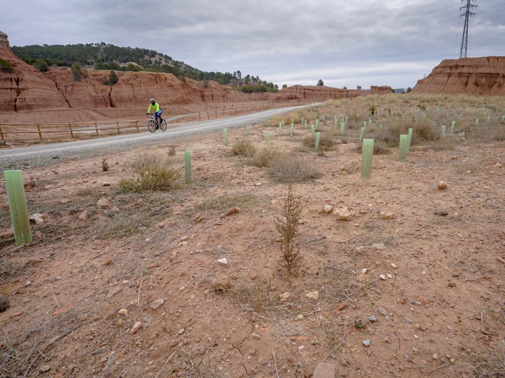 Los plantones del parque de Las Arcillas se están secando por falta de riego.