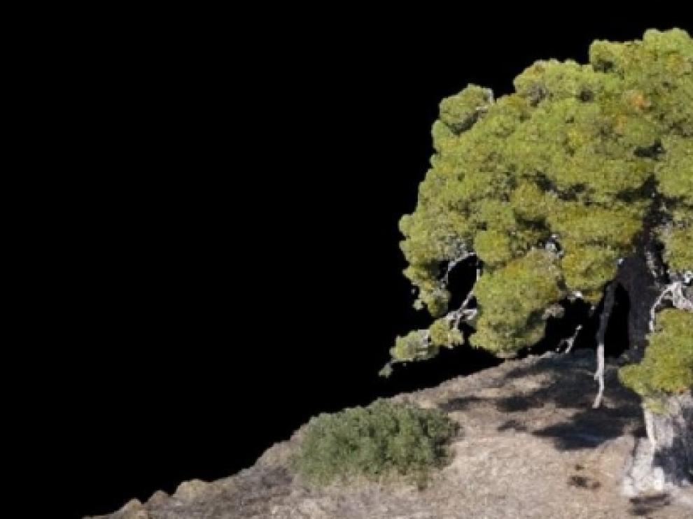 Los árboles monumentales singulares de Aragón, en 3 dimensiones