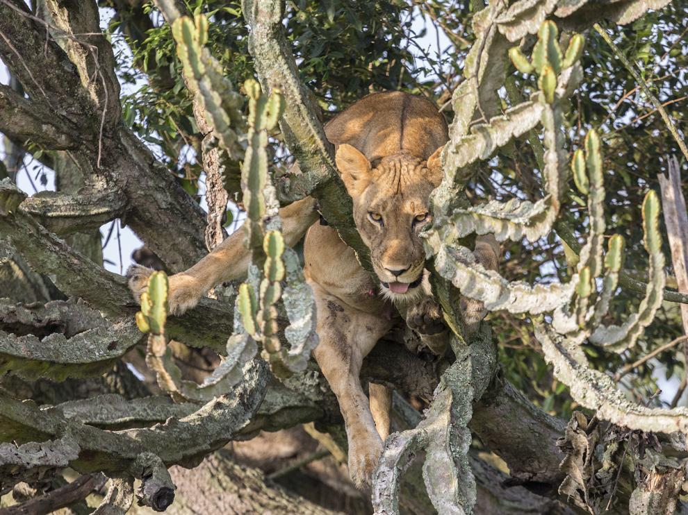 Safari por África con el zaragozano Ramiro Blancas