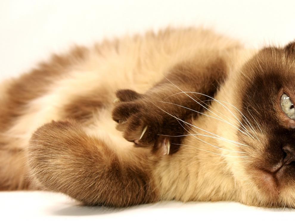 Los gatos han sido protagonistas, en muchas ocasiones, por su especial carácter.