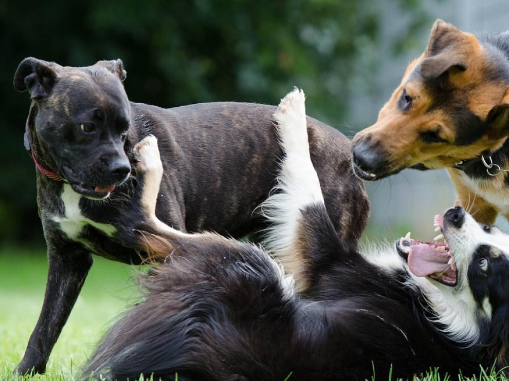 Los perros grandes encuentran más dificultades a la hora de ser acogidos en un nuevo hogar.