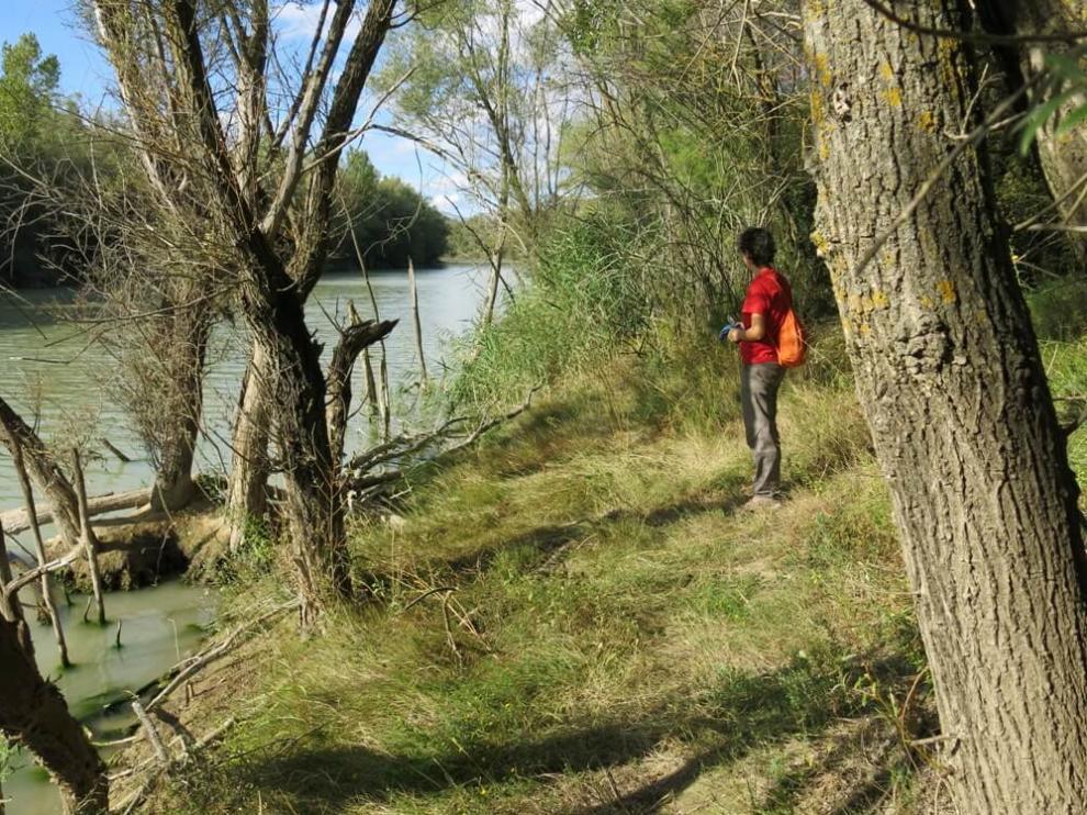 El sendero botánico de Biscarrués recorre seis kilómetros de sotos por las orillas del Gállego.