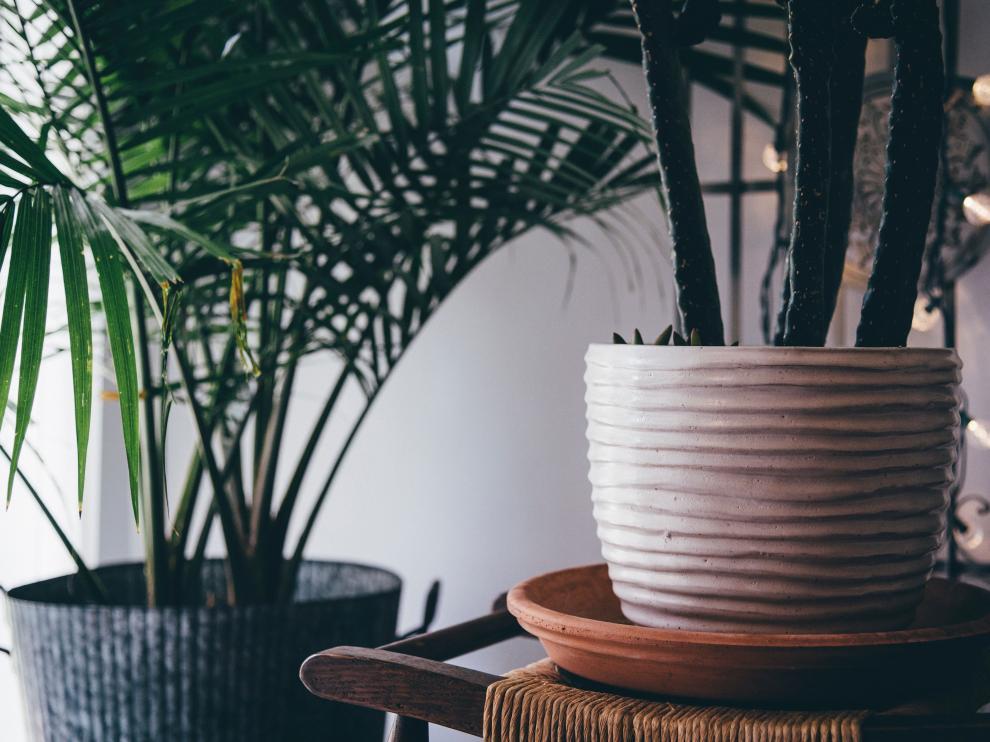 Las plantas de interior se emplean para limpiar el ambiente de sustancias contaminantes.