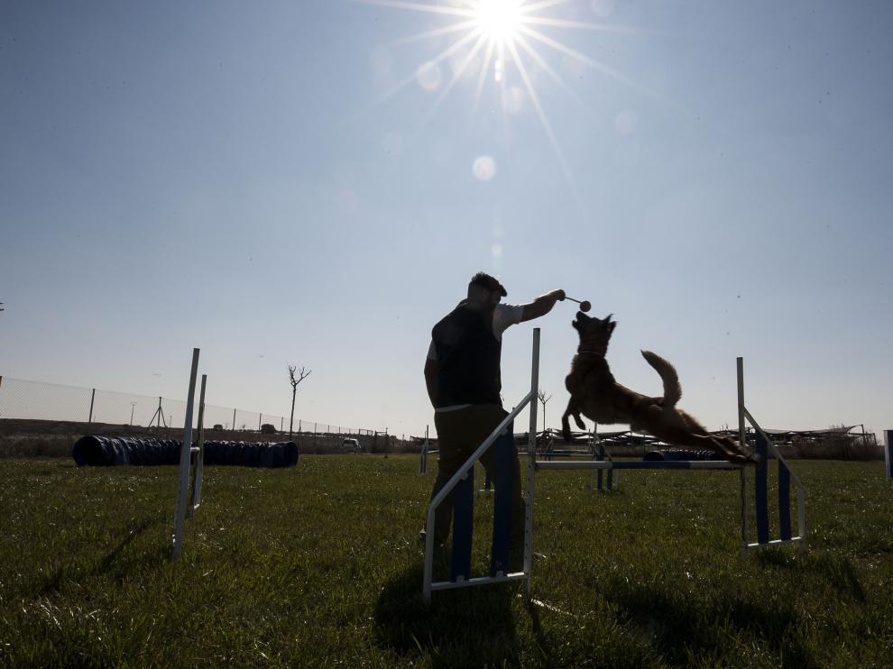 En Bolscan se combinan las facetas de residencia canina con las de centro de adiestramiento deportivo de estos animales.