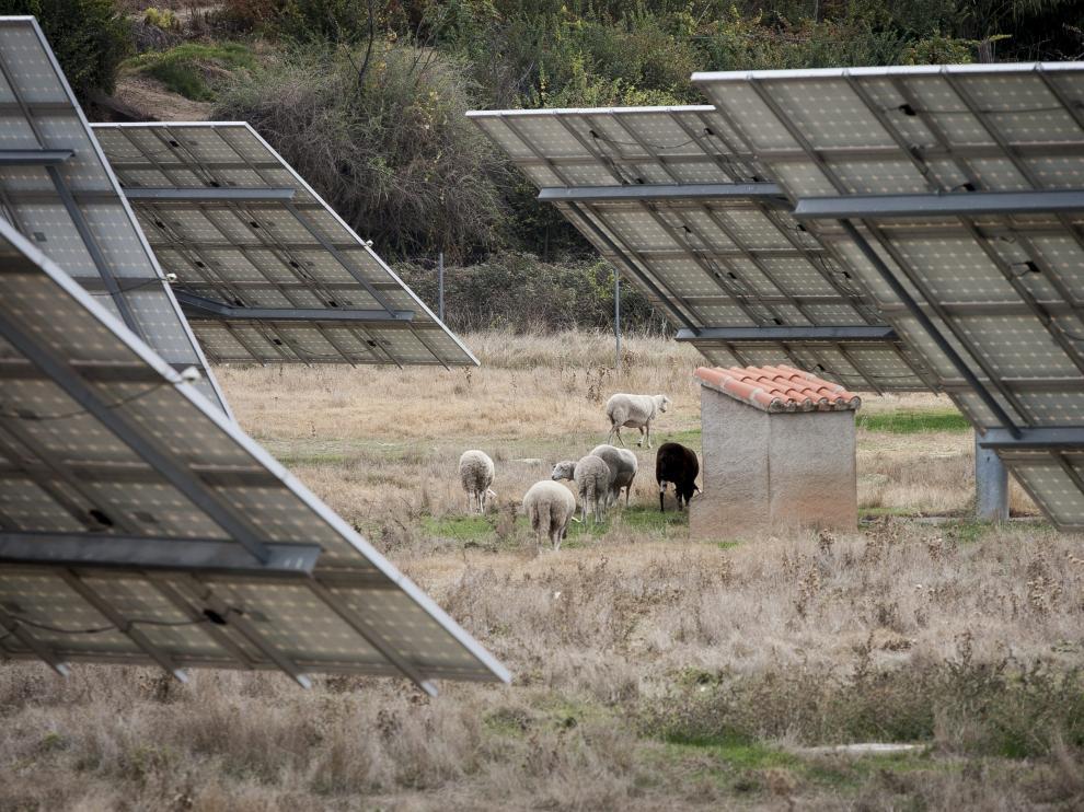 Un rebaño de ovejas, entre placas solares fotovoltaicas, a las afueras de San Martín del Río.