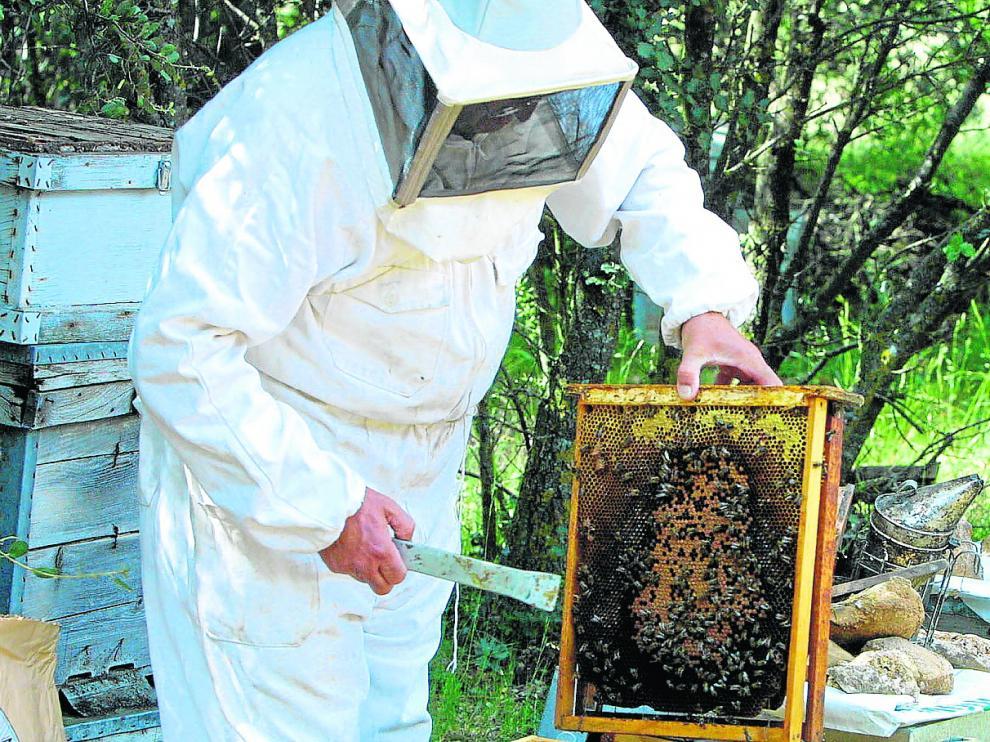 Un apicultor aragonés muestra un panal con numerosos ejemplares muertos, supuestamente por la contaminación por pesticidas.