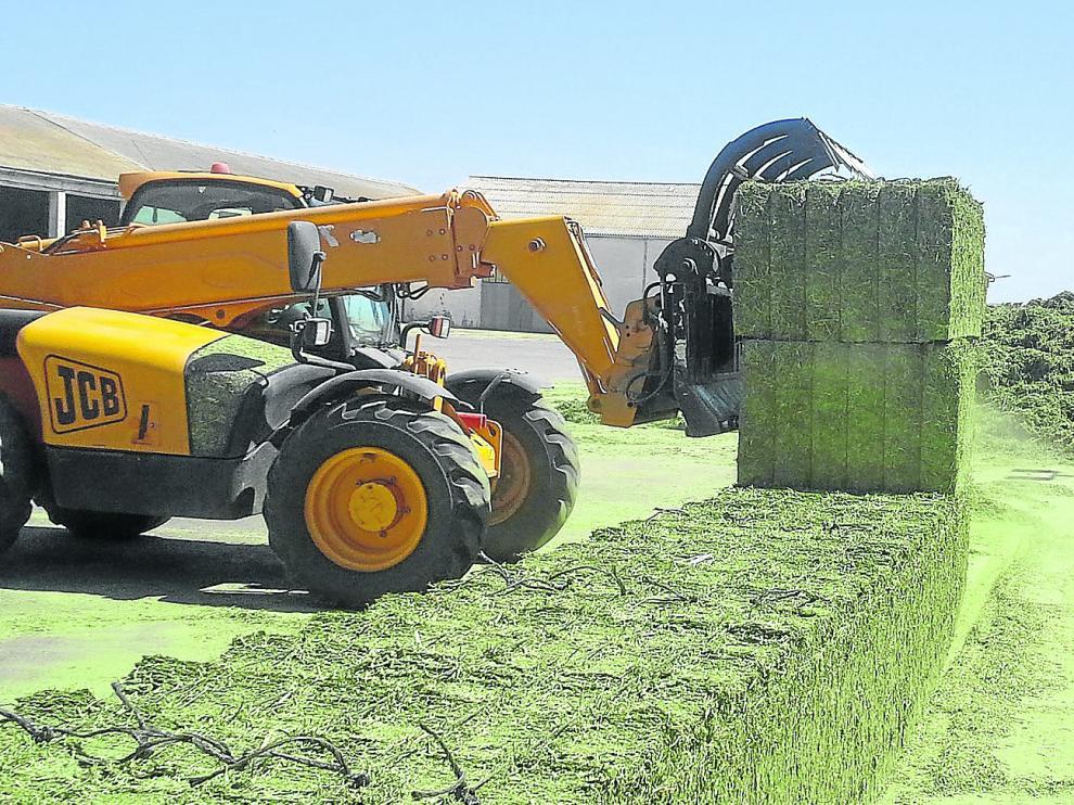 Fabricación de balas de alfalfa en una industria deshidratadora. En Aragón se encuentran 33 de las 72 fábricas que hay por toda España.