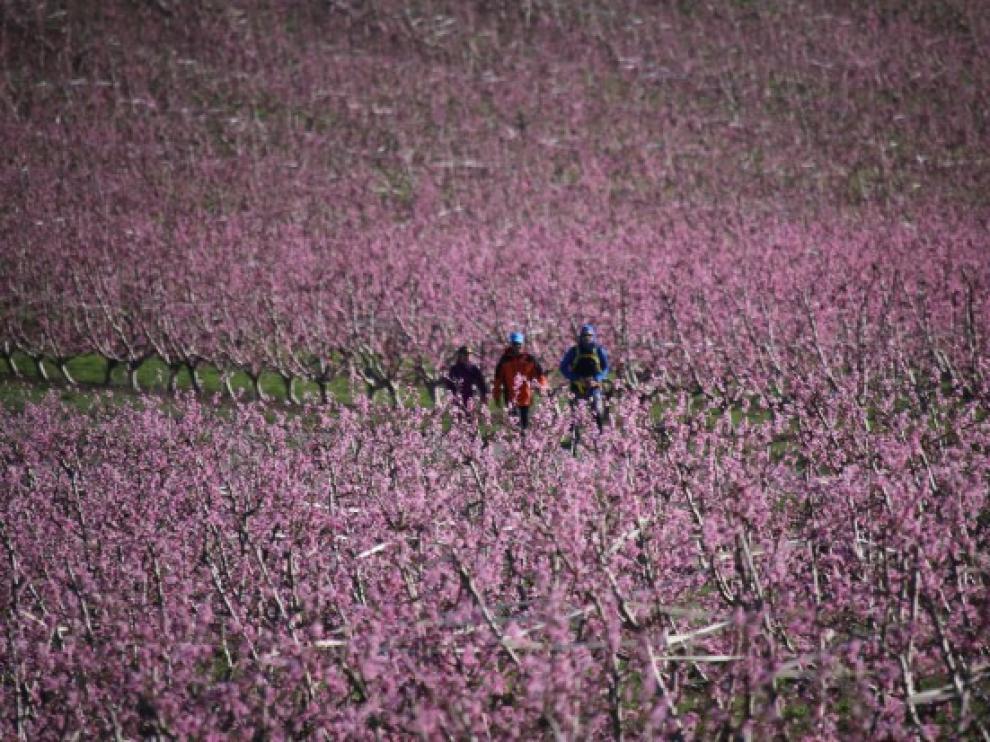 Senderistas atravesando los campos de frutales.