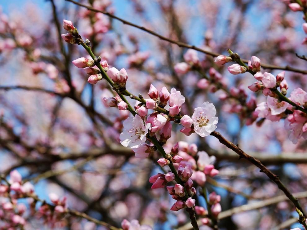 Conocida como la 'estación del amor', la primavera marca el inicio del buen tiempo y es una estación en la que sentirnos más positivos y con más energía.