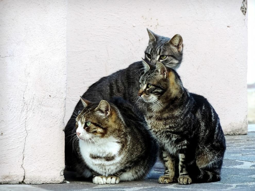 Aena prohíbe que su personal alimente a los gatos abandonados que viven en Barajas.