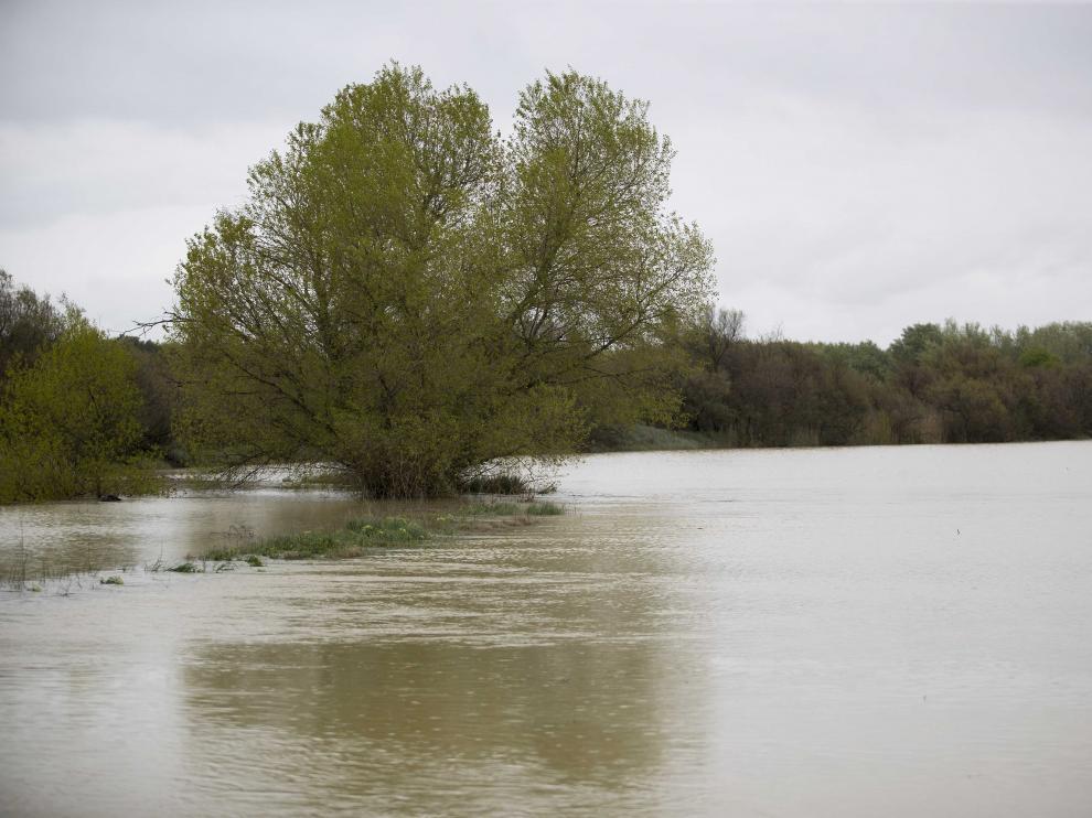 Cecida del Ebro a su paso por Pina de Ebro.