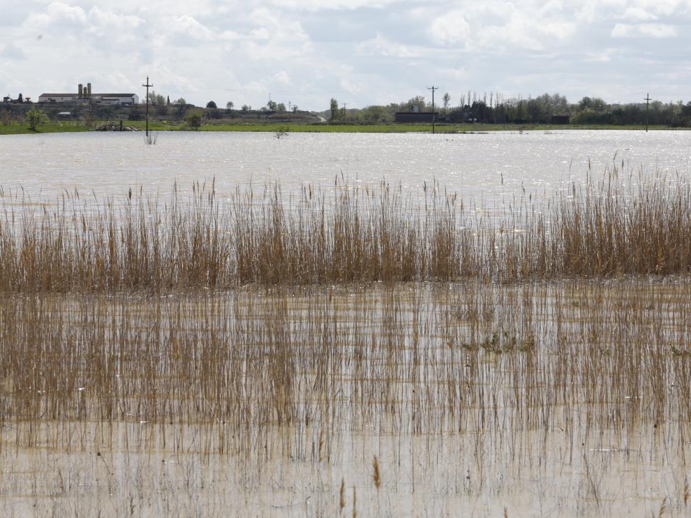Con la vista puesta en el Ebro para decidir si se desalojan Pradilla y Boquiñeni