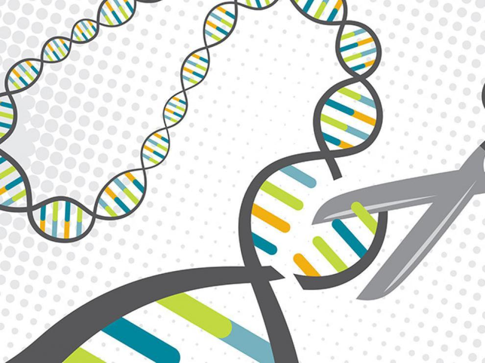 Como unas tijeras genómicas, la técnica CRISPR/Cas9 permite editar el ADN con gran precisión