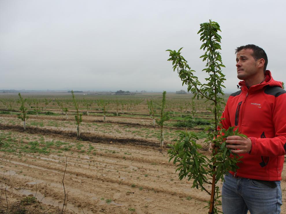 El gerente de la finca, Hugo Oliván, observando la evolución de los almendros plantados en el monte de Frula (Huesca).