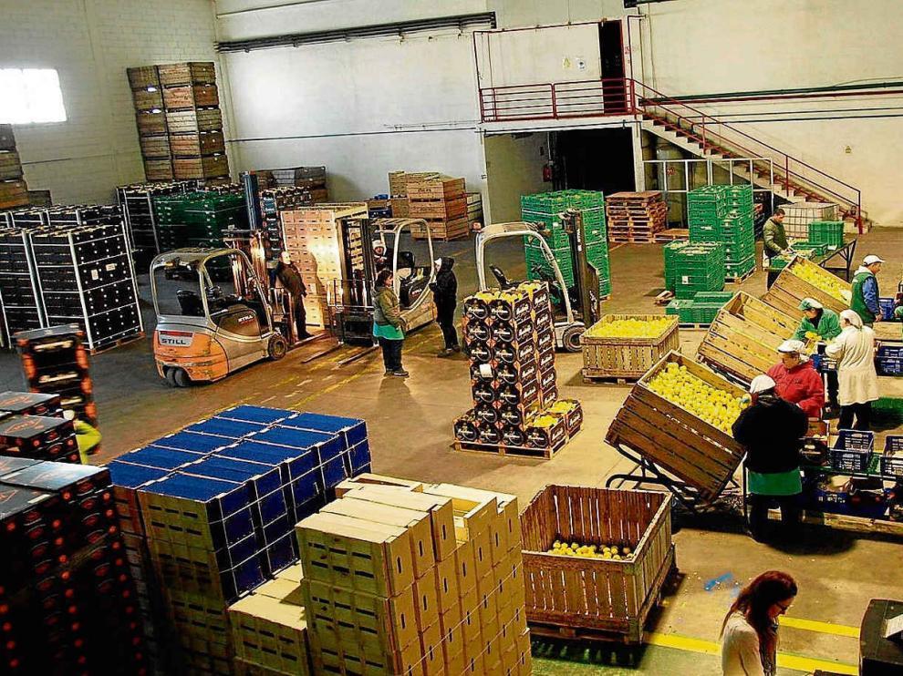 La sala de confección de la empresa Frutas Gil.
