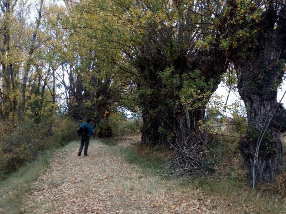 Un tramo de la ruta del chopo cabecero entre Jorcas y Aguilar del Alfambra.
