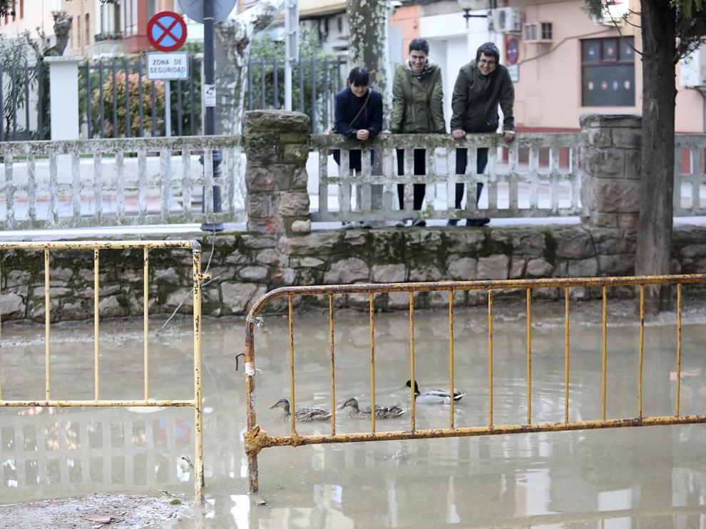 El parque de Huesca se convirtió en un estanque. Los patos del parque Miguel Servet confundieron este domingo los charcos formados en la zona verde con un estanque, para diversión de los viandantes. El agua hizo impracticable el acceso por Vicente Campo debido al embalsamiento por la lluvia.