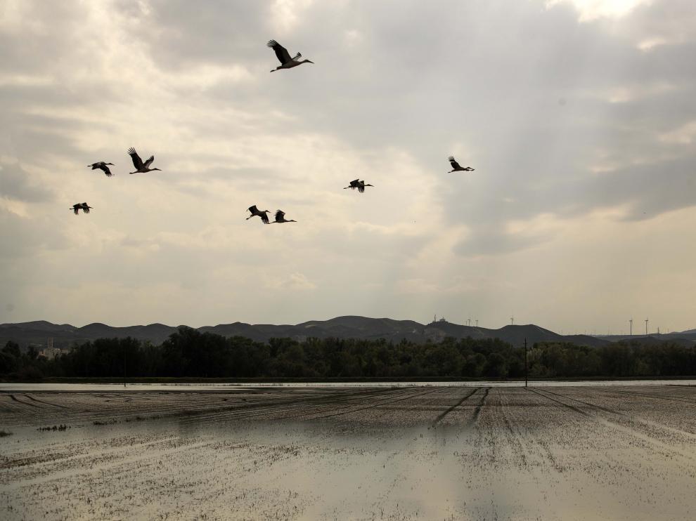 Estado en el que se encontraban los campos de la ribera baja a finales de semana