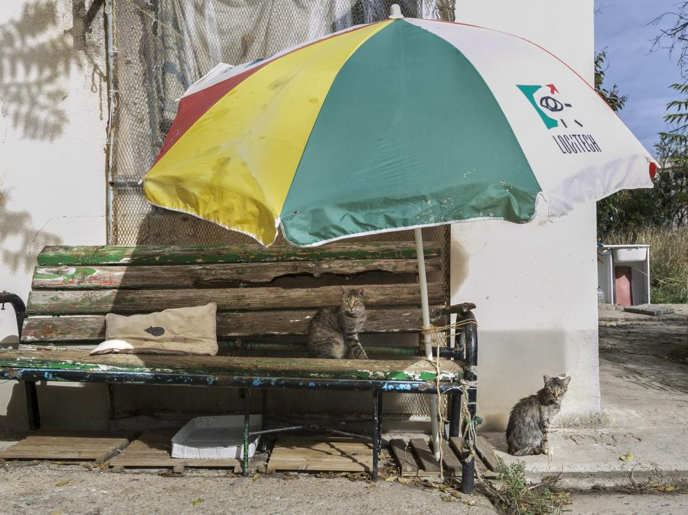 Un par de animales junto a la zona del parque Pignatelli donde van a comenzar las obras de forma inminente.