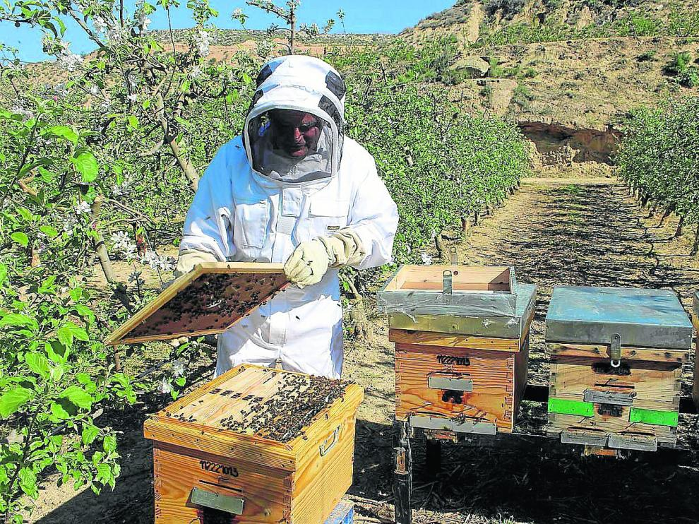 Un apicultor revisa la situación de sus colmenas en una explotación cercana a Fraga.