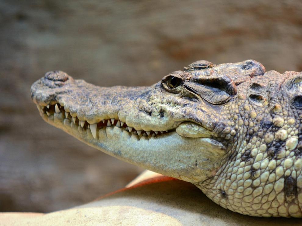 El cocodrilo atacó a la mujer mientras navegaba en una canoa hinchable.