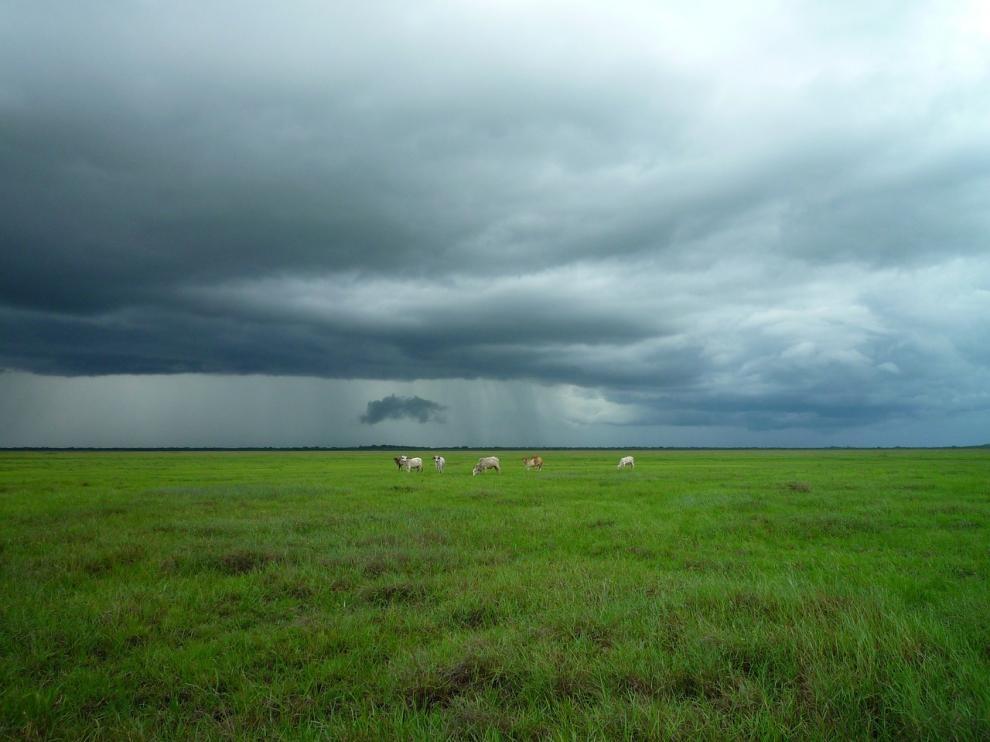 Esas vacas deberían ponerse a cubierto: se van a mojar.