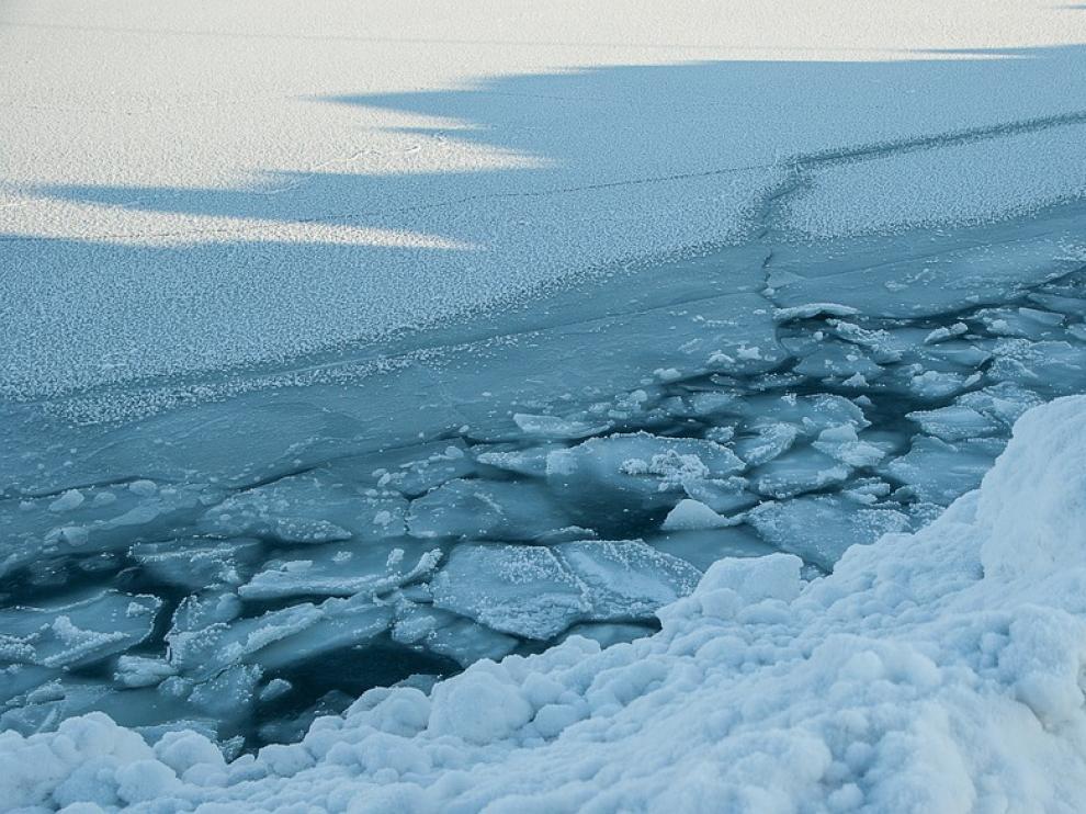 El transporte masivo de algas en el Ártico podría afectar a muchas especies de seres marinos.
